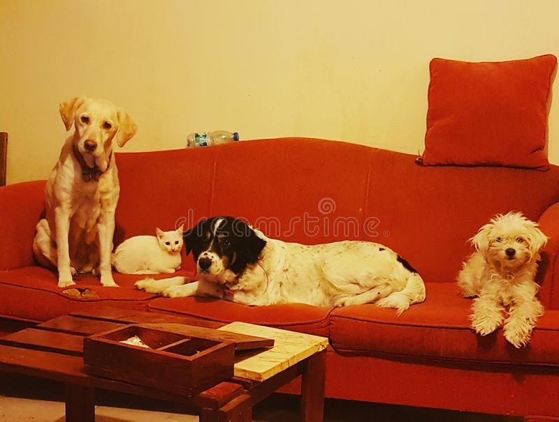 Animals dogs cat. Cats and dogs stock photo