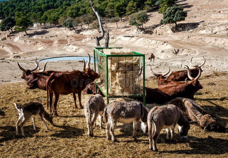 Animals feeding at Safari park stock image