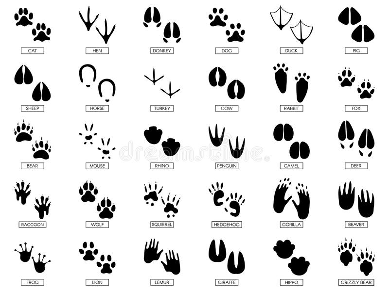 Animals footprints. Animal feet silhouette, frog footprint and pets foots silhouettes prints vector illustration set vector illustration