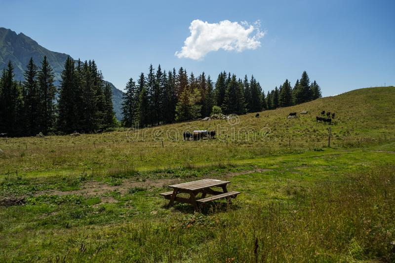 Animals grazing in the mountains royalty free stock photography