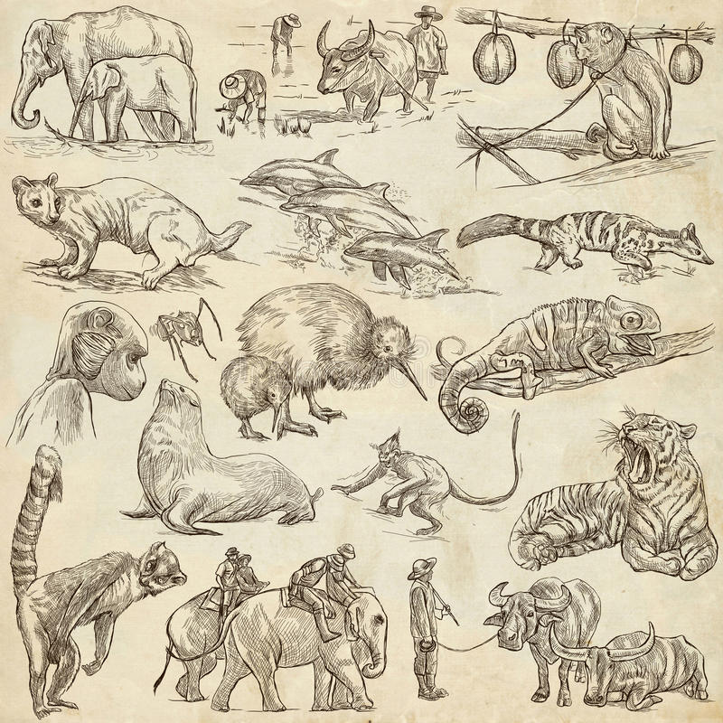 Animals - An hand drawn, full sized, illustrations on paper. stock illustration