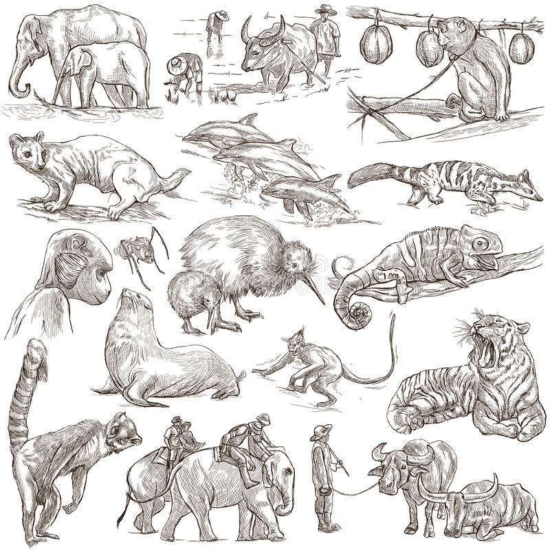 Animals - An hand drawn, full sized, illustrations on white. stock illustration