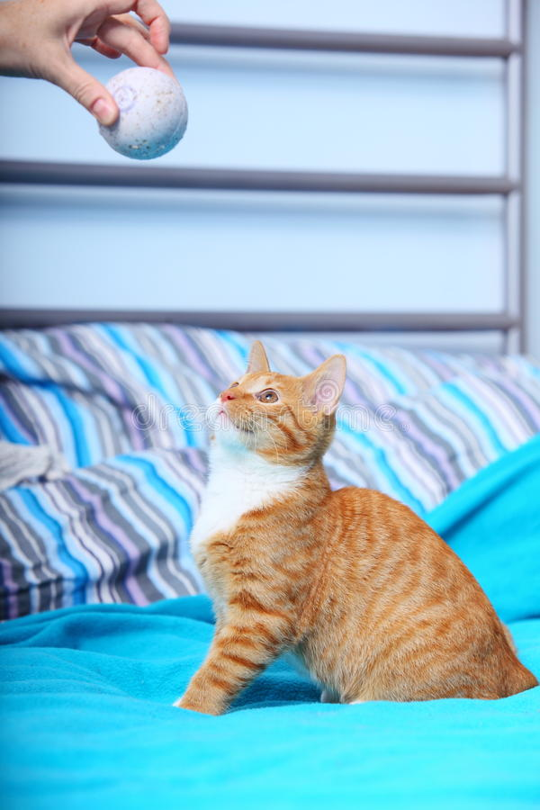 Animals at home - red cute little cat pet kitty on bed. Animals at home. Red cute little baby cat pet kitten laying on bed playing with ball turquoise blanket royalty free stock photo