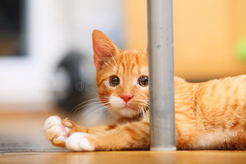 Animals at home - red cute little cat pet kitty on floor. Animals at home. Red cute little baby cat pet kitten laying on floor royalty free stock photo
