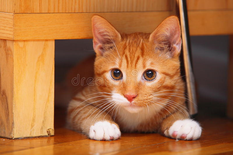 Animals at home - red cute little cat pet kitty on floor. Animals at home. Red cute little baby cat pet kitten laying on floor royalty free stock image