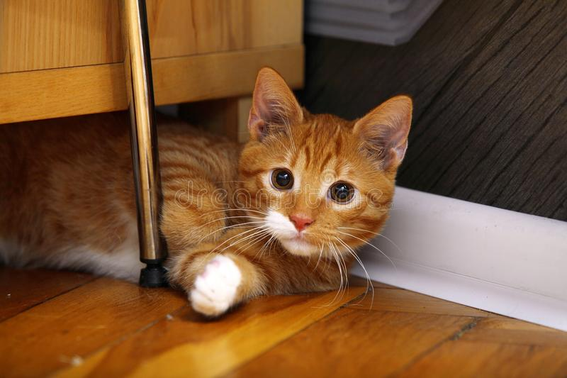 Animals at home - red cute little cat pet kitty on floor. Animals at home. Red cute little baby cat pet kitten laying on floor stock photos