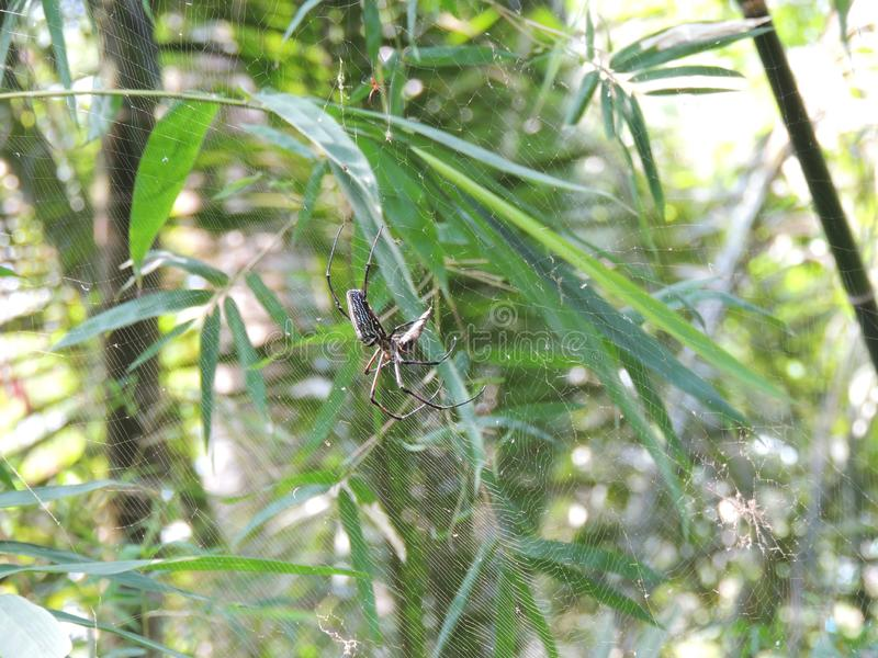 Animals, insects, spider, Thailand, tropical, Phuket, exotic,cobweb, vegetation, macro stock images