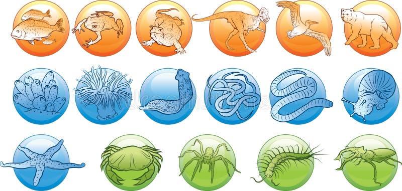 Animals kingdom. Vector illustration of animal kingdom vector illustration