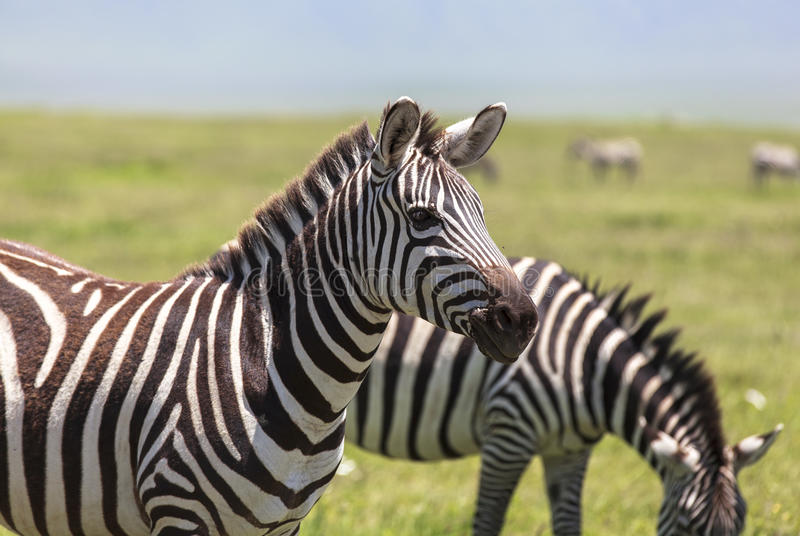 Animals in Maasai Mara, Kenya stock photo