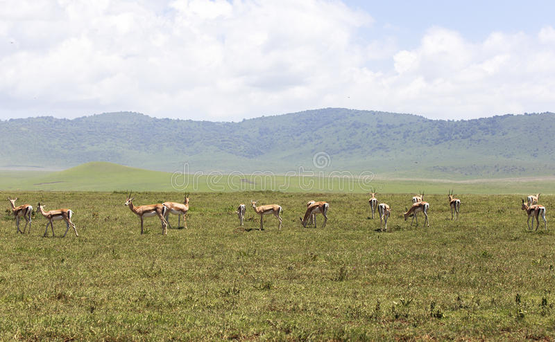 Animals in Maasai Mara, Kenya stock photography