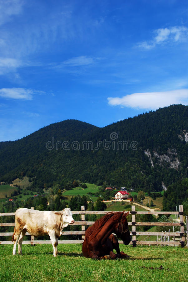 Download Animals on magura stock photo. Image of forest, herbage - 17270208