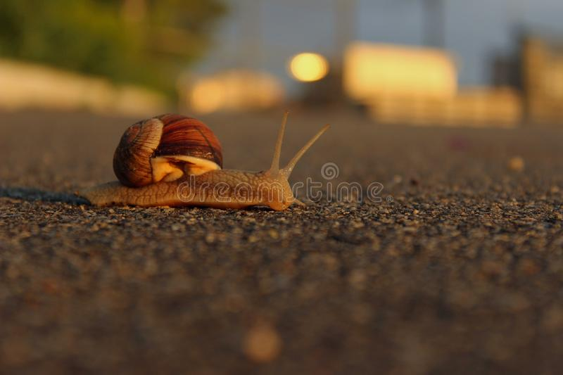 Animals, Nature Concept. Snail On The Road Over Green Grass Background. stock photography