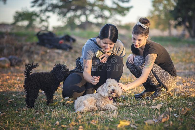 Animals and people, having fun in the park royalty free stock images