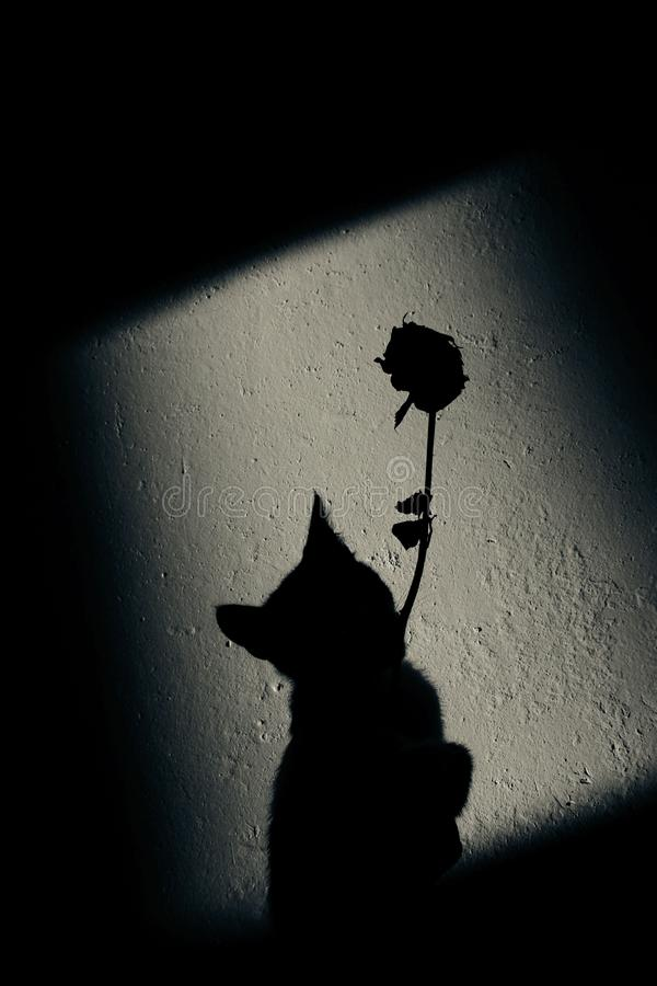 Animals, pets concept. Abstract black shadows on the wall. Silhouette of a cat and rose on the wall. stock photo