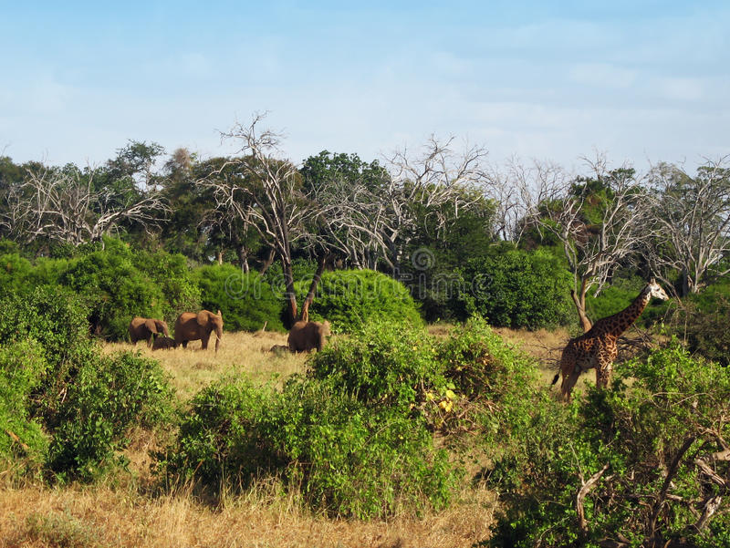 Download Animals on the savannah stock image. Image of grass, animals - 18316313