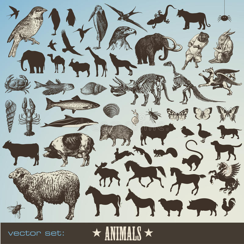 Animals set stock photos
