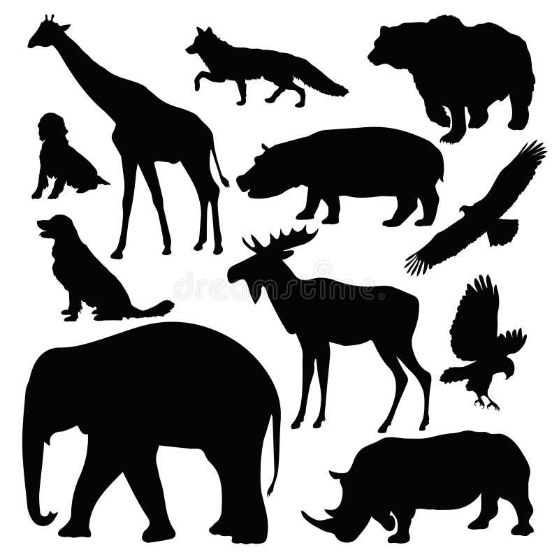 Download Animals stock vector. Image of eagle, bird, black, bear - 33559051