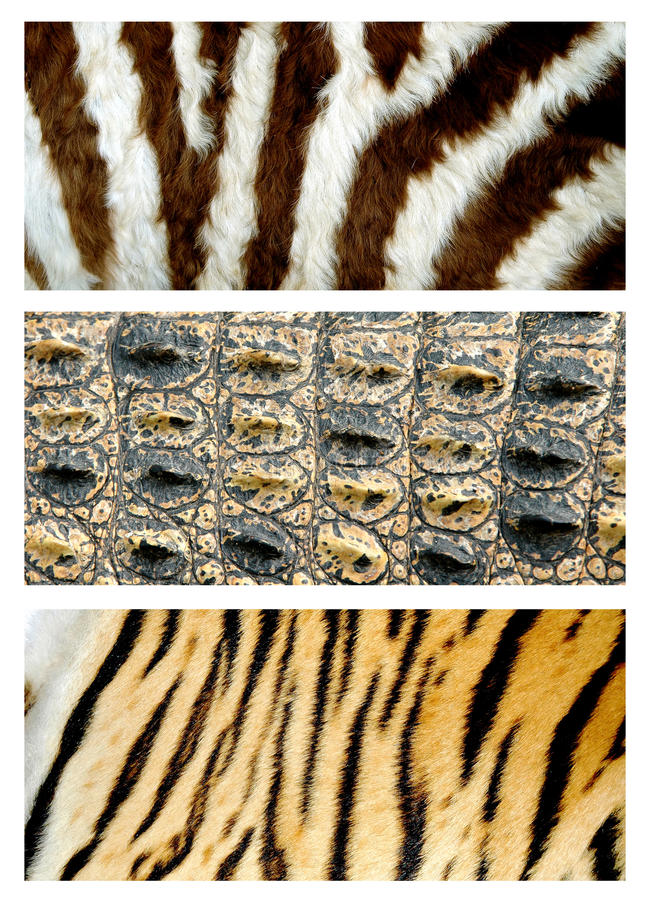 Animals skin. Zebra, crocodile and tiger skin royalty free stock photography