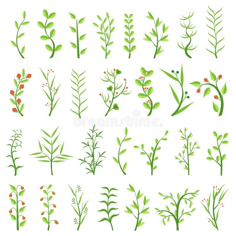 Set of various herbs. Healing herbs. Shrubs with berries. Weeds. Algae. Climbing plants. Vector illustration. royalty free illustration