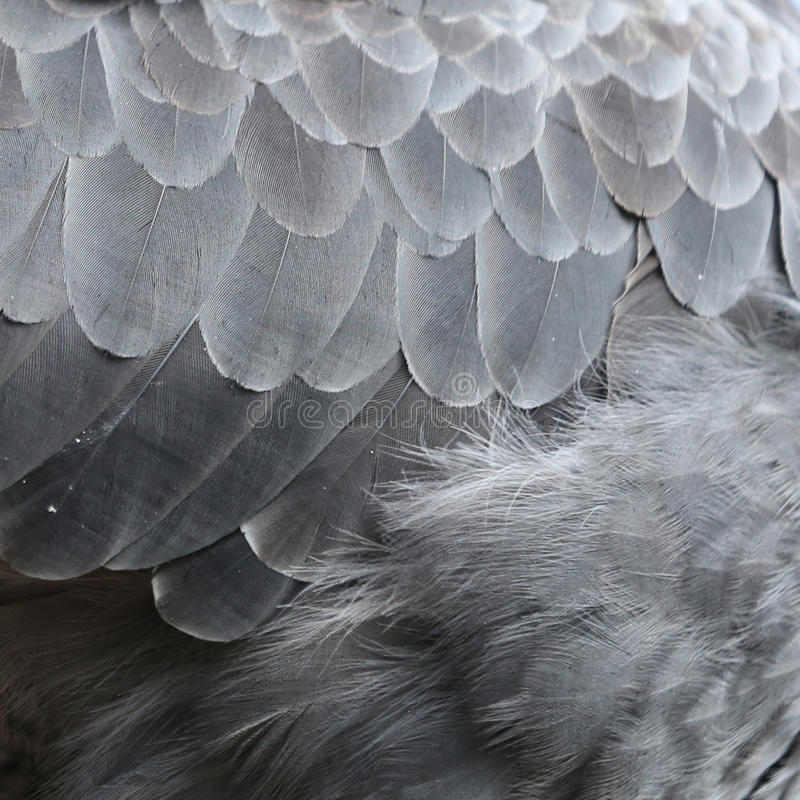 Animals and Texture Bird Feather royalty free stock photography