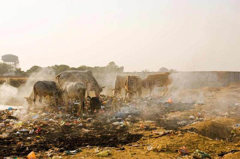 Download Animals in Trash stock image. Image of scorch, unhealthy - 9751041