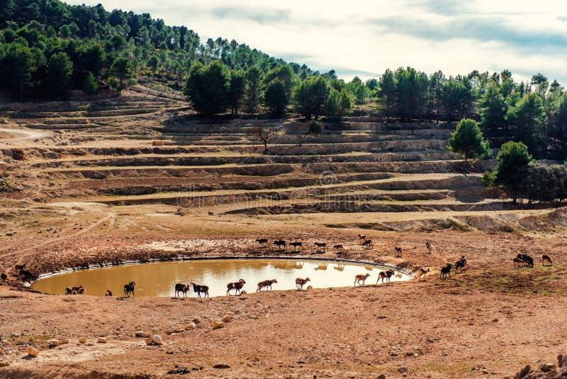 Animals walking around a waterhole stock photo