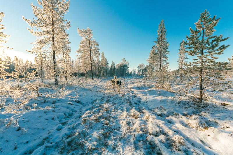 Animals Walking On Snow Covered Forest Dominio Público Y Gratuito Cc0 Imagen
