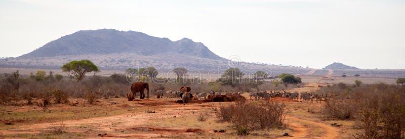 Animals, zebras, elephants on the waterhole in Kenya. On safari royalty free stock photos