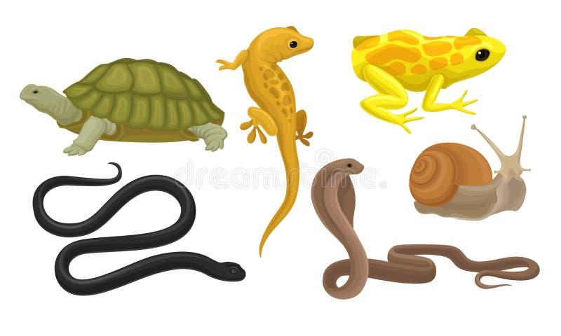 Animaux À Sol Froid, Amphibiens Et Reptiles, Serpents, Vecteur D'Escargot Illustration Isolée Sur Fond Blanc illustration stock