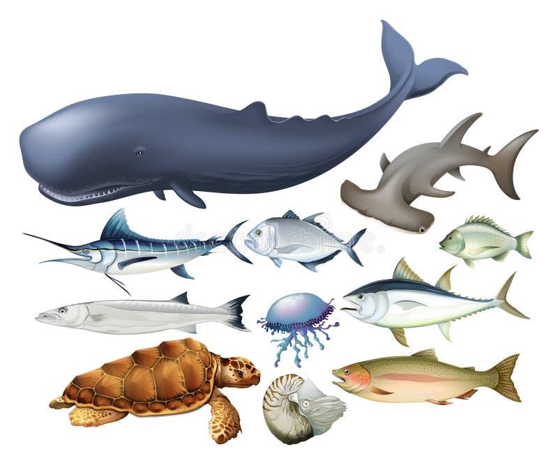 Animaux aquatiques sur le blanc illustration libre de droits