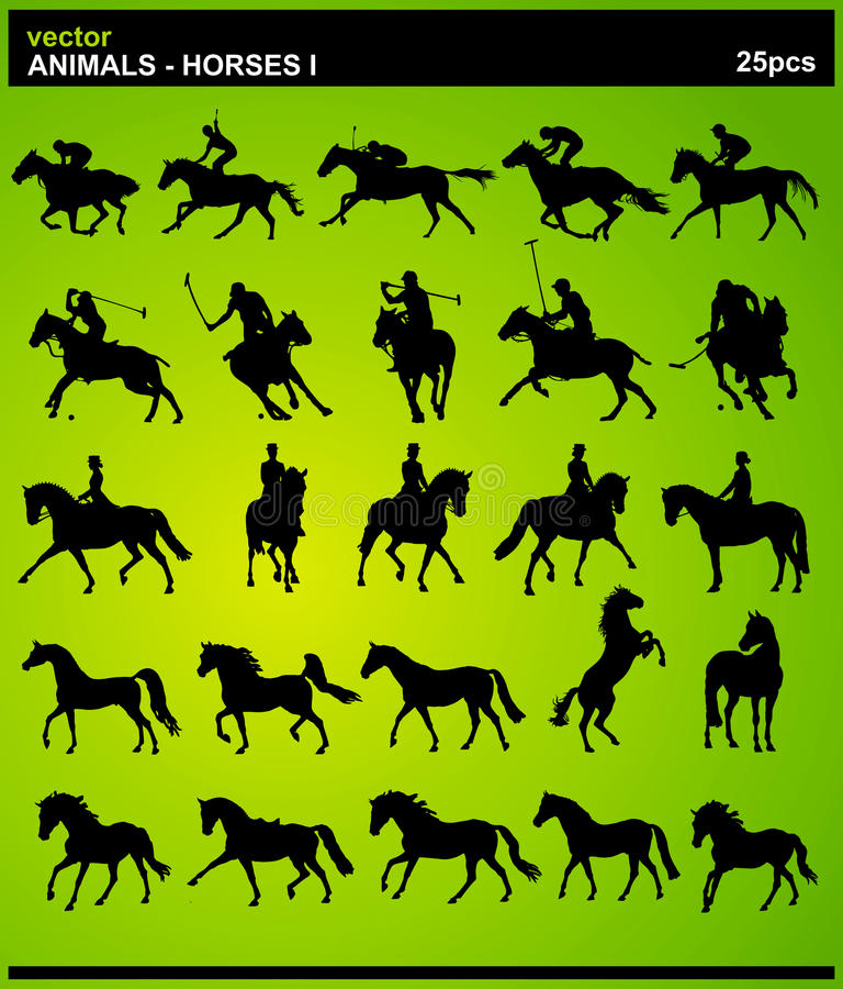 Animaux - chevaux I image stock