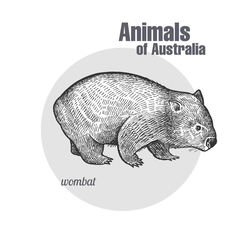 Animaux d'Australie wombat illustration libre de droits