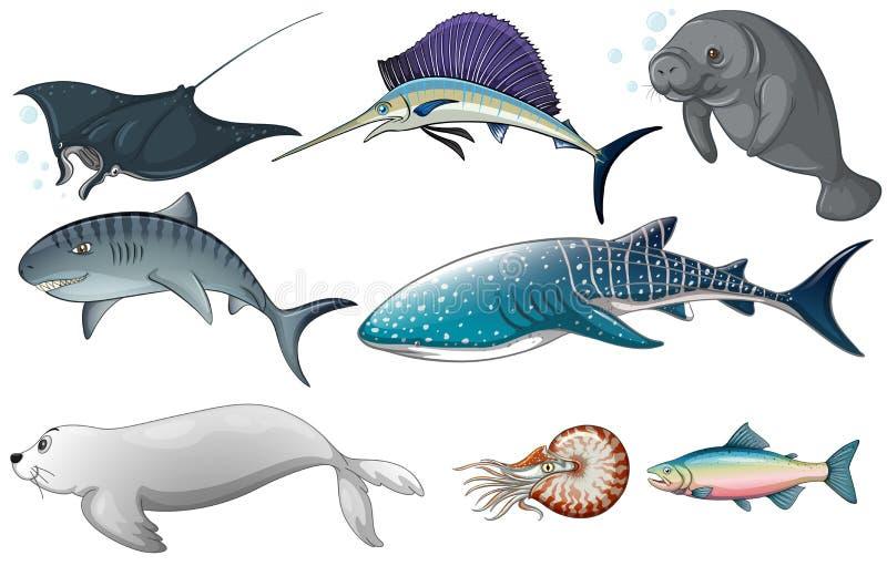 Animaux d'océan illustration libre de droits