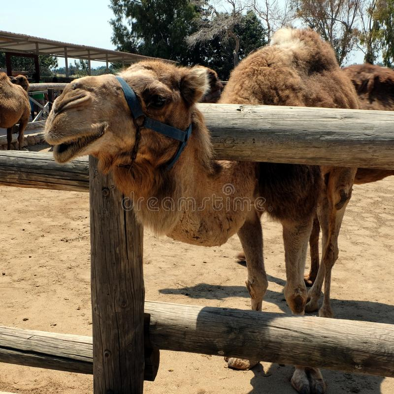 Animaux dans Larnica Chypre photographie stock