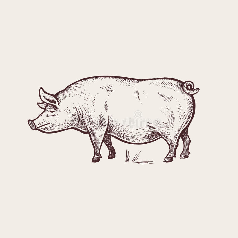 Animaux de ferme d'illustration - porc illustration libre de droits