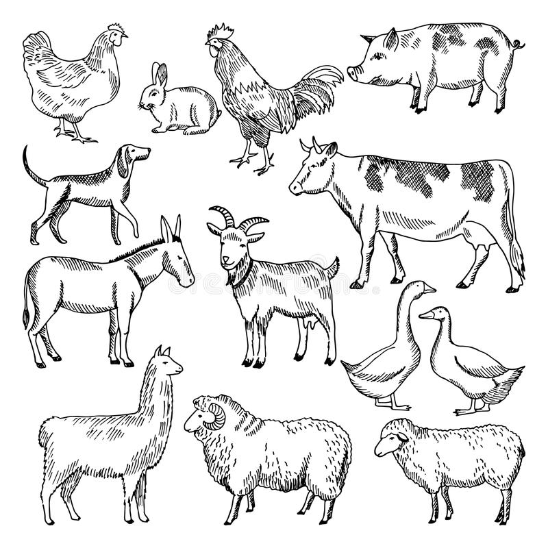 Animaux de ferme de vintage Agriculture du style dessiné d'illustration à disposition illustration de vecteur