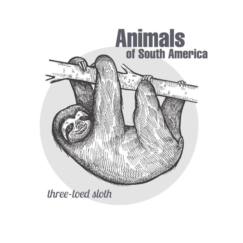 Animaux de la paresse de l'Amérique du Sud illustration libre de droits