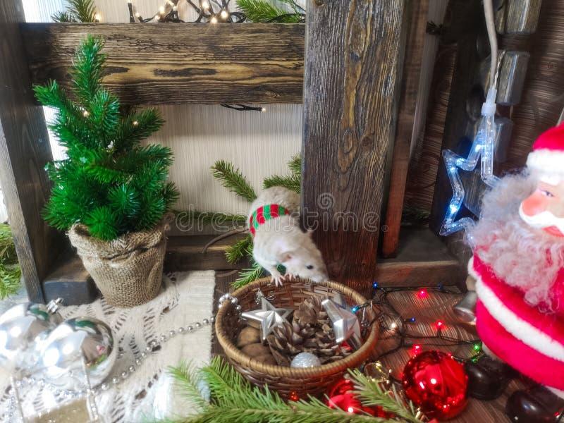 Animaux de No?l Rat sur le fond des décorations de Noël images stock