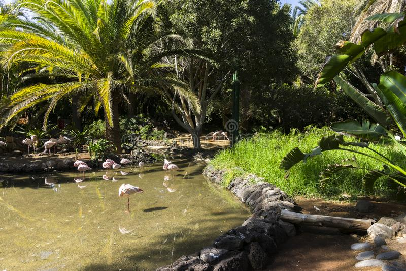 Animaux de parc d'oasis photographie stock libre de droits
