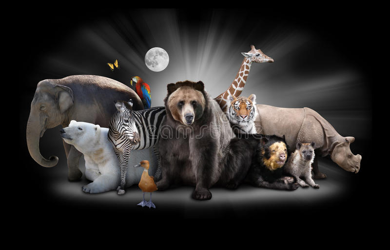 Animaux de zoo la nuit avec le fond noir illustration stock