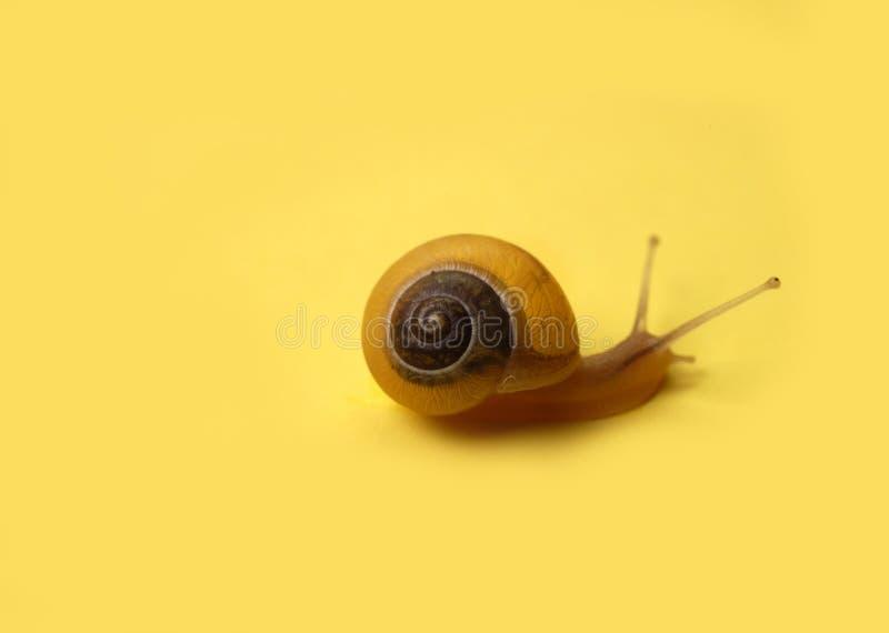 Animaux - escargot sur le jaune photographie stock libre de droits