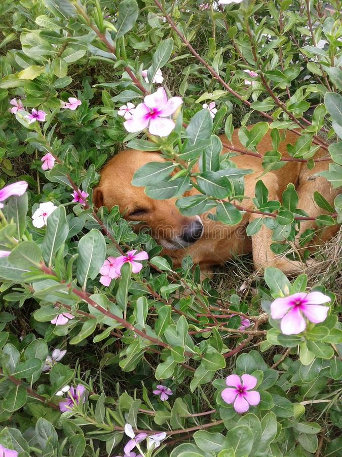 Animaux et nature de fleurs images libres de droits