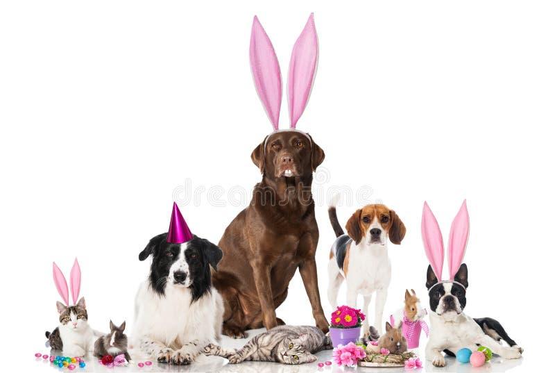 Animaux familiers de Pâques photos libres de droits