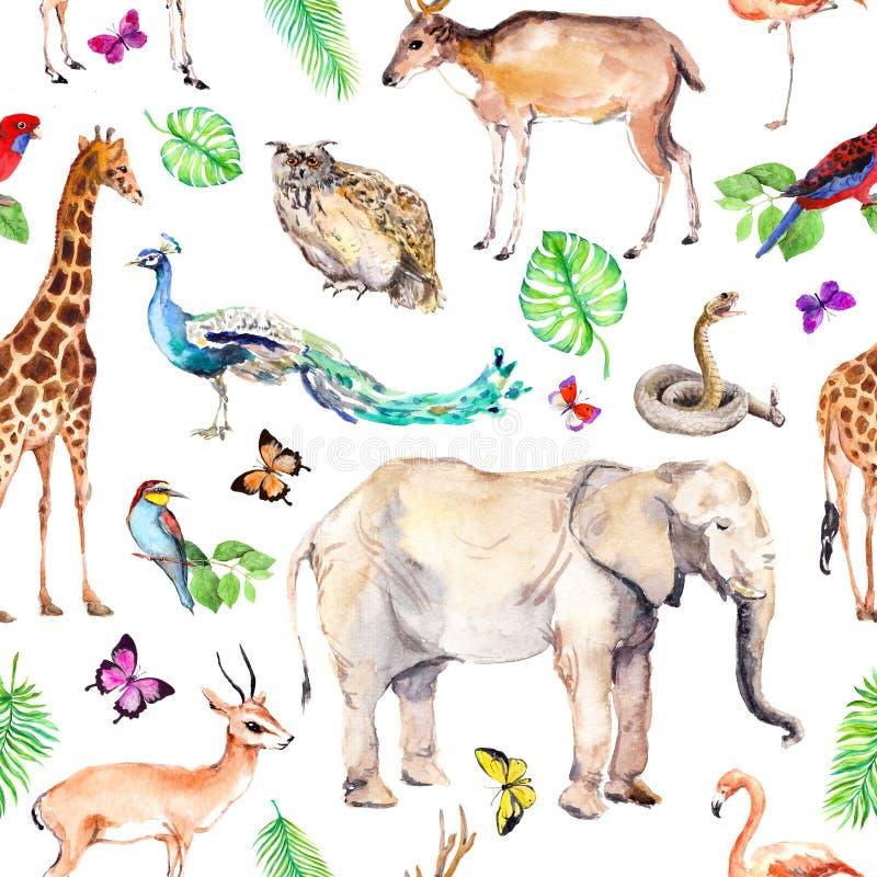 Animaux sauvages et oiseaux - zoo, faune - éléphant, girafe, cerf commun, hibou, perroquet, autre Configuration sans joint waterc illustration de vecteur