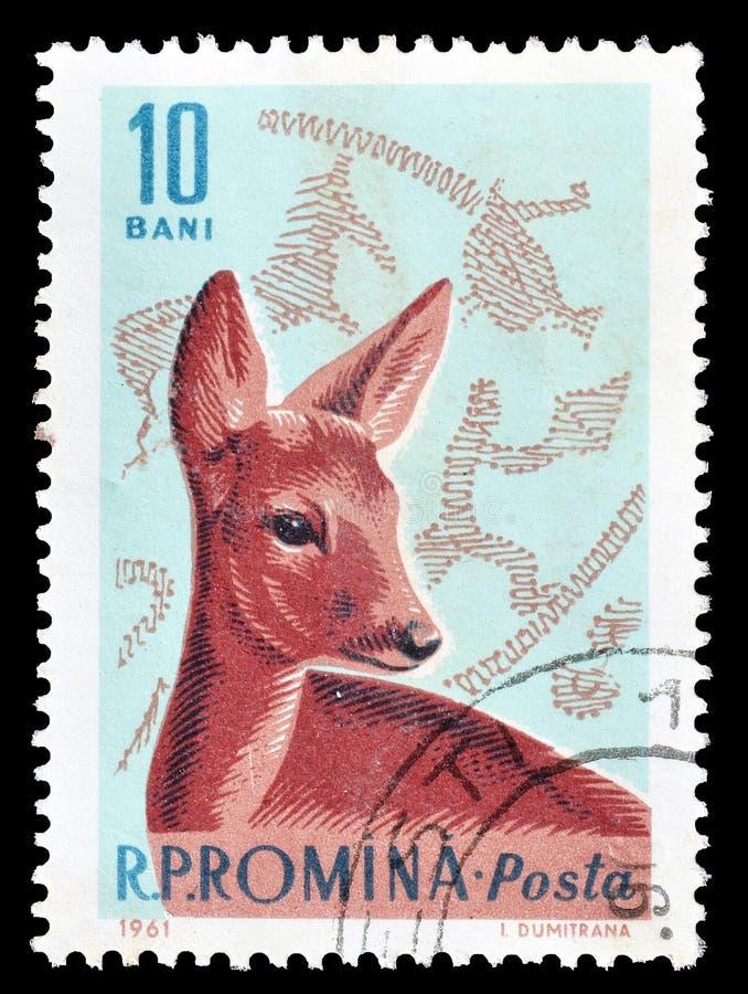 Animaux sauvages sur des timbres-poste photo libre de droits