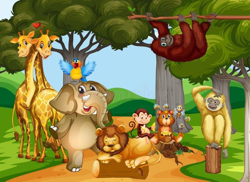 Animaux sauvages vivant dans la forêt illustration de vecteur