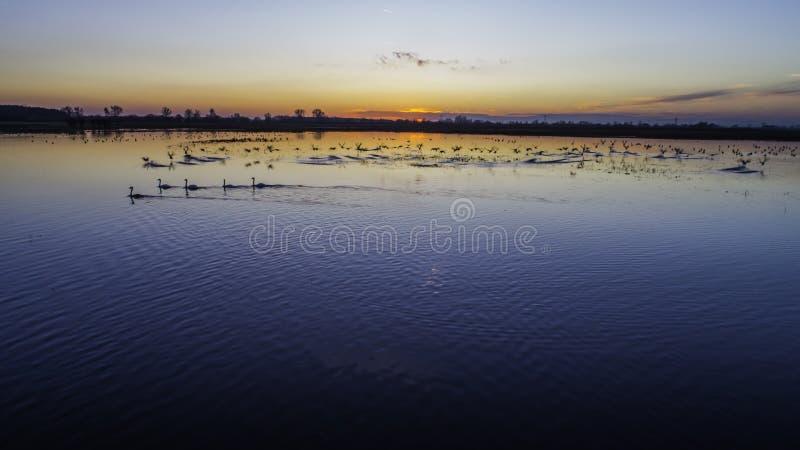 Animaux sur les mares au coucher du soleil image stock