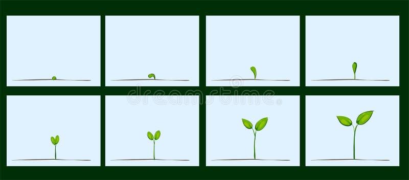 Animeringen av kärnar ur groende på jord stock illustrationer