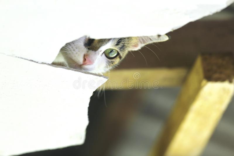 Animnal/Wildlife. A wild cat is exposed to his head when he is covered on the roof of a damaged house royalty free stock images