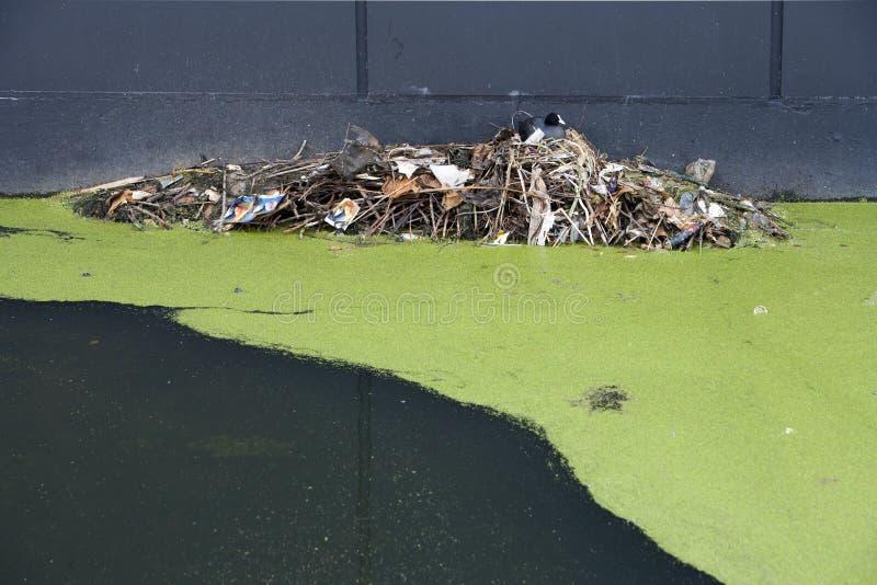 Aninhamento na poluição imagens de stock royalty free